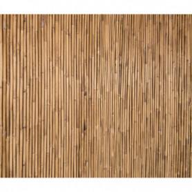 Bambou_vertical