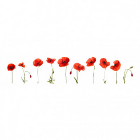 Coquelicots Fond Blanc